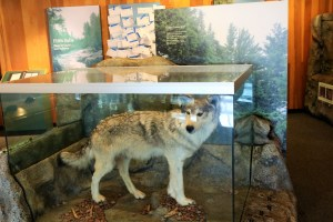 Display, Gooseberry Falls Visitor Center