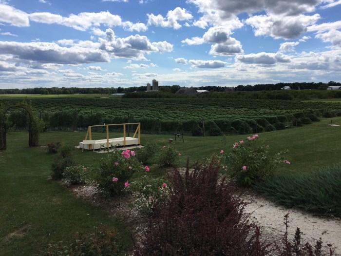 Wisconsin vineyard