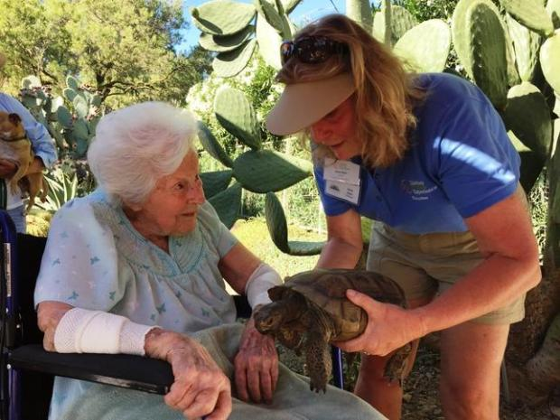 The Southwest Sunset Social at the Ruth Bancroft Garden recently welcomed a surprise visitor, Ruth Bancroft, shortly before her 107th birthday. She joined the festivities to meet wildlife ambassadors from Lindsay Wildlife Experience.
