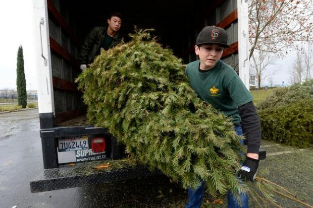 Boy Scout Spencer Reich, of Antioch, unloads a christmas tree with the help of Justin Cheng, 13, of Brentwood, back, both from Troop 153, in the parking lot at the Antioch Water Park in Antioch, Calif., on Saturday, Jan. 9, 2016. Boy Scouts from Antioch, Pittsburg, Brentwood and Oakley helped collect and recycle Christmas trees and asked for a small donation. The scouts collected trees last weekend and also this weekend. (Jose Carlos Fajardo/Bay Area News Group)