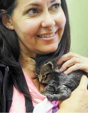 Benicia Pet Food Express employee Crystal Distefano cuddles Will, a 4-week old kitten recently found with severe infections and injuries. Distefano and her daughter Katie are fostering the injured kitten, who may have been used as training bait for fighting dogs. (MIKE JORY — TIMES-HERALD)