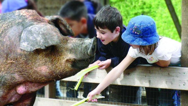 CREDIT: Shelly Lewis The Little Farm and the Environmental Education Center at Tilden Regional Park in the Berkeley hills will have special talks and activities as part of the #OptOutside promotion on Nov. 25.