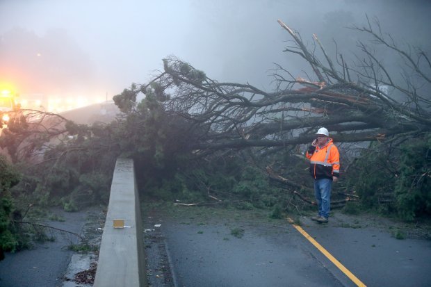 CalTran maintenance supervisor Brian Cadigan makes a phone call as he surveys a 200-foot long tree that fell on a Chevy Camaro driving on southbound highway 13 near the Moraga exit in Oakland, Calif, on Saturday, Dec. 10, 2016. The solo driver did not suffer any injuries and it might take a few hours to remove the tree and open all lanes back to traffic. (Ray Chavez/Bay Area News Group)