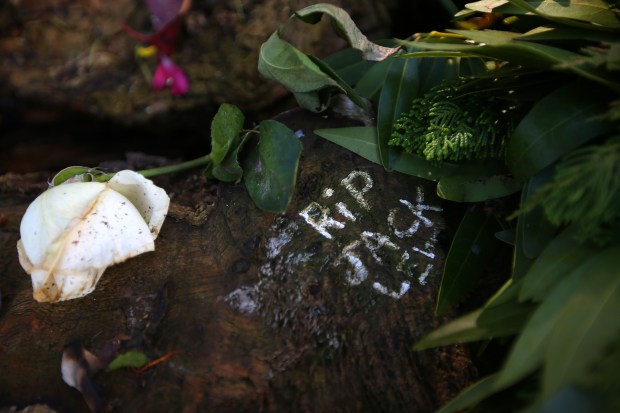 A flower and message are photographed on the stump of a tree during a press conference at Lake Merritt on Monday, Dec. 20, 2016, in Oakland, Calif. The Lewis family has filed a wrongful death lawsuit against the city of Oakland, stemming from the death of 16 year old Jack Lewis, who was killed when the branch of a tree he was climbing broke. (Aric Crabb/Bay Area News Group)