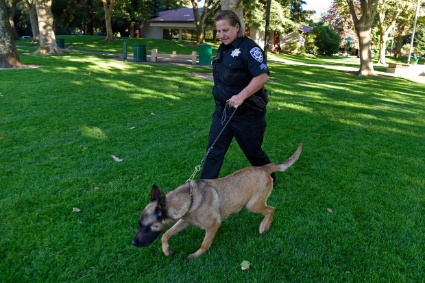Walnut Creek K-9 police officer Liz Wallace walks Izy, a 3-year old Malinois, while at Civic Park in Walnut Creek, Calif. on Friday, June 15, 2017. Izy is new to the department. Walnut Creek now has a total of three K-9 officers on the force. (Jose Carlos Fajardo/Bay Area News Group)