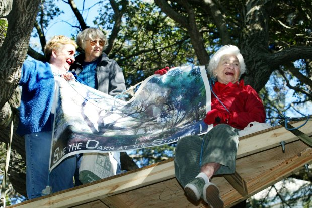 Senior civic leaders, from left, Shirley Dean, 71, fomer Mayor of Berkeley, Betty Olds, 86, Berkeley City Council, and Sylvia McLaughlin, 90, founder of Save The Bay, gather atop of an oak tree next to the Memorial Stadium in Berkeley, Calif., on Monday Jan. 22, 2007. They climbed the tree to support the ongoing protest against the University of California's plan to cut down 38 of the 50 native coast live oaks to build a gymnasium. (Ray Chavez/The Oakland Tribune)