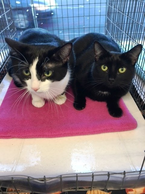 Rose and Poppy are CC4C's Pets of the Week for Oct. 6.(Courtesy of CC4C)