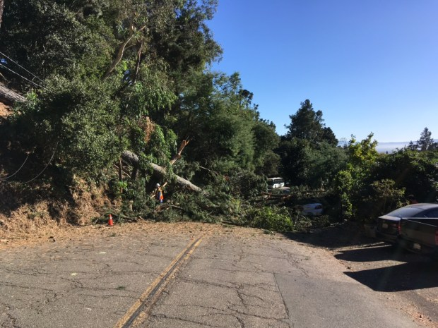 Workers begin assessing a pine tree's fall Monday, October 2, 2017 that blocked Snake Road in both directions.