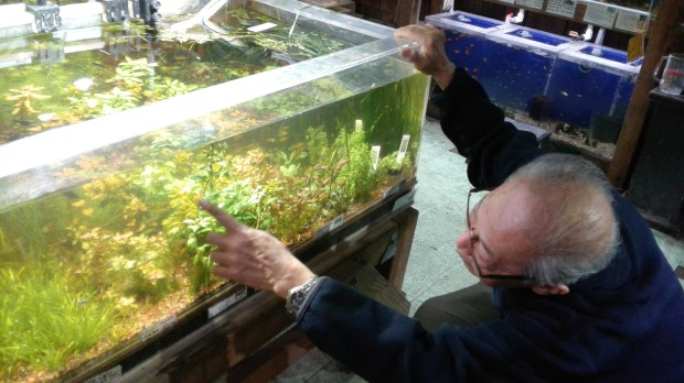 """Guy Oei points to an aquarium tank at the Albany Aquarium, filled with plants -- an influence of the time he lived in Holland. """"The Dutch aquarium is based on a complete ecology with live plants,"""" Oei says. (Damin Esper/For Bay Area News Group)"""