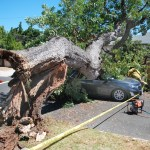 California woman and dog crawl out of car smashed by falling tree 💥👩👩💥