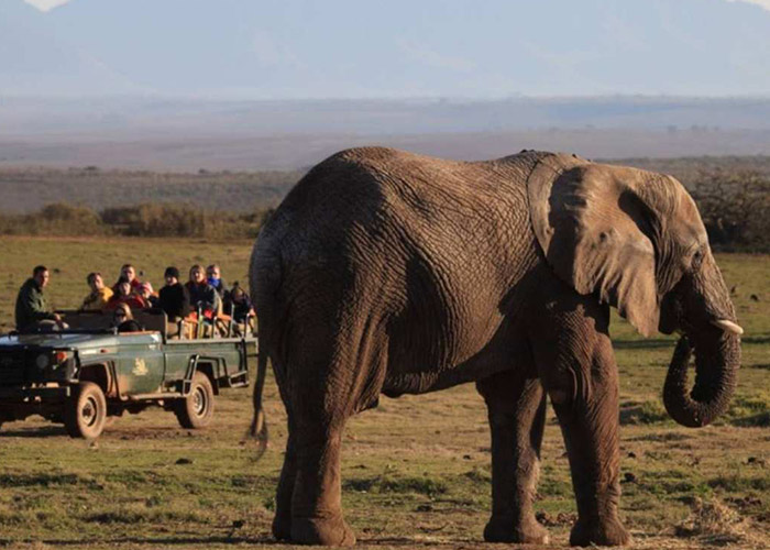 Garden Route and Game Lodge Game Drive