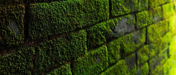 Brick Walls: Jesse P. Vendrick, Sr.