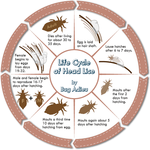Get Ready for Lice Season! - photo#15