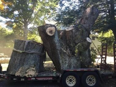 003-Tree-Services-East-Coast-Tree