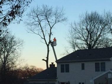 007-Tree-Services-East-Coast-Tree