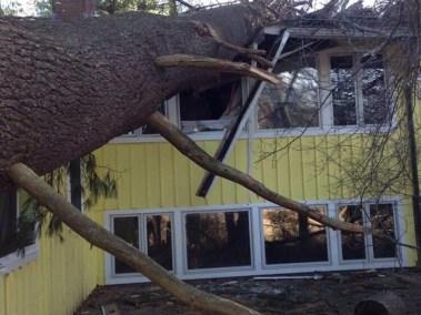 022-Tree-Services-East-Coast-Tree