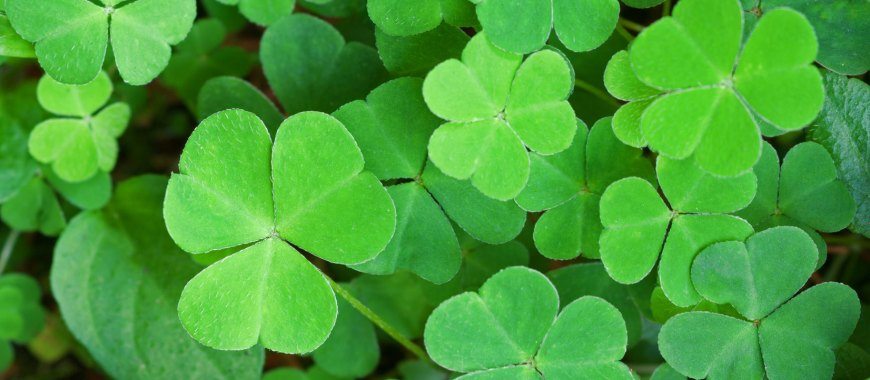 St. Patrick's Day Local Events Southold NY