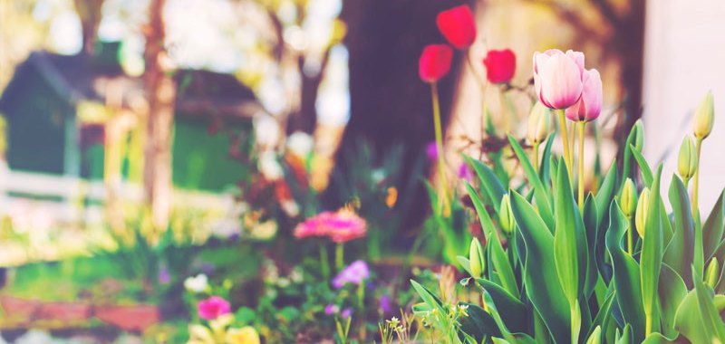 Protect Your Home with These Spring Home Maintenance Tips