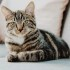Why You Should Secure Pet Insurance for Your Indoor Cat
