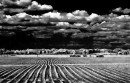 Bridgehampton Potato fields | Rick Gold