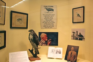Mr. Puleston's osprey work on display in the exhibit.