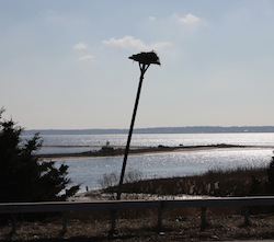An osprey nest in winter next to Route 25 in Southold, near Mill Creek.