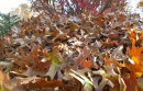 These autumn leaves don't inspire too many romantic songs