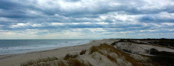 The Otis Pike National Wilderness on Fire Island