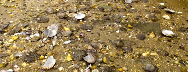 Scallop Season at the Boat Ramp