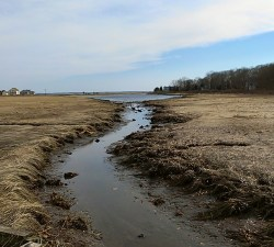 The marsh grasses in Hall's Creek in Cutchogue are calving.