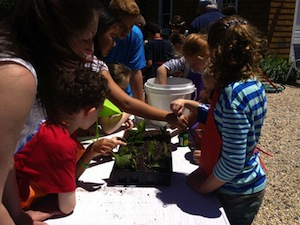 New Suffolk students learning to propagate hydrangias | MaryGrace Steinfeld photo