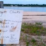 West Neck, Shelter Island plover