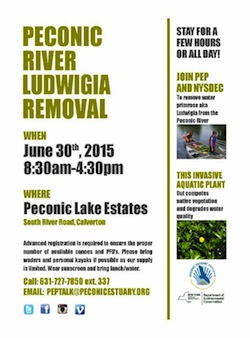 Cleaning up ludwiga from the Peconic River