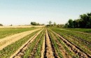 Peconic Land Trust Orient Farm