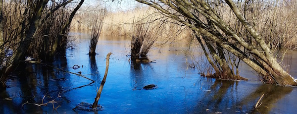 Wetlands off of Monsell Trail in Greenport may now be included in the Bay-to-Sound trail network.