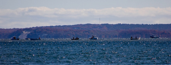 The scallop fleet west of Robins Island, Monday morning.