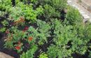 One rain garden design.