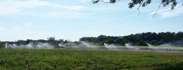 August irrigation, Depot Lane, Cutchogue