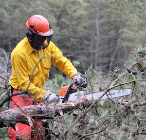 Adam Robedee limbs a tree in Chris Dicintio's saws class.