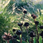 Although there's lot to do in the garden in November, refrain from cutting back ornamental plants with beautiful seed heads, such as the fountain grass and black-eyed Susan (shown in the foreground) pictured here.