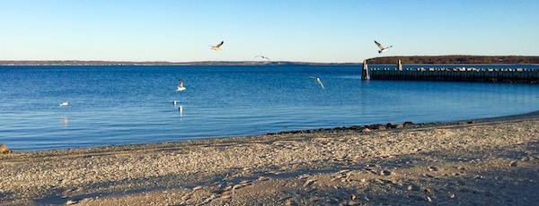 Seagull Sunset Sunday