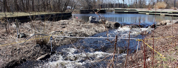 Waiting for the Alewives to return, Grangebel Park, Riverhead