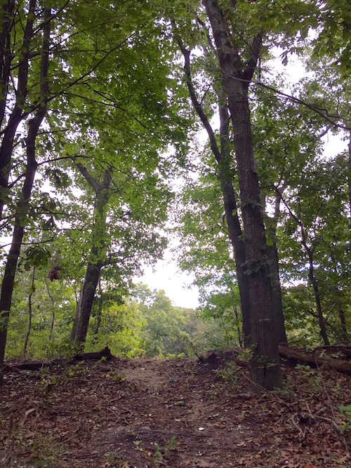 An existing path winds through a mature oak forest.
