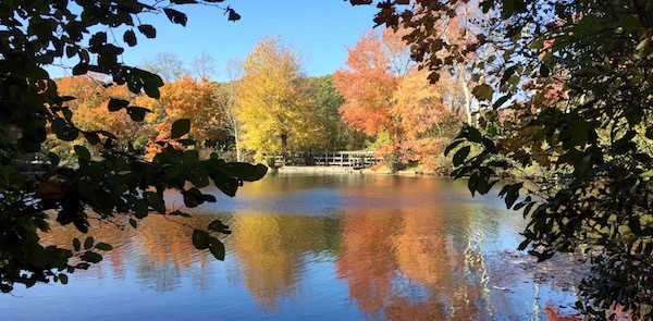 Yesterday, Trout Pond
