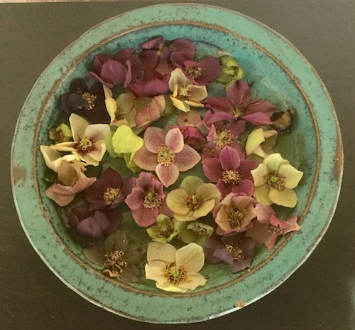 Hellebore blossoms floating in water make an elegant and surprisingly long-lasting decoration. | Erika Shank photo