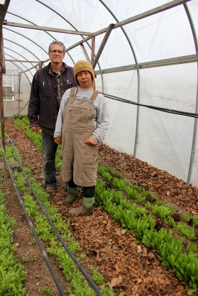 Ira Haspel and Sonomi Obinata with the dandelion greens they grow in the greenhouse at KK's The Farm in Southold.