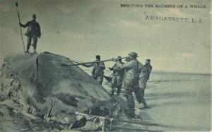 Whale off Amagansett Postcard