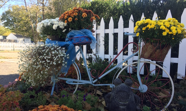 Bicycle Mums, Mattituck
