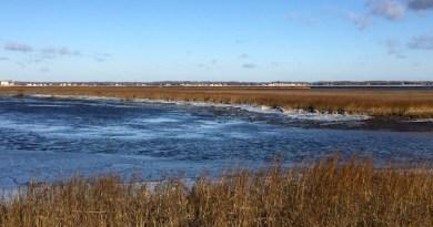 In Birch Creek, Flanders