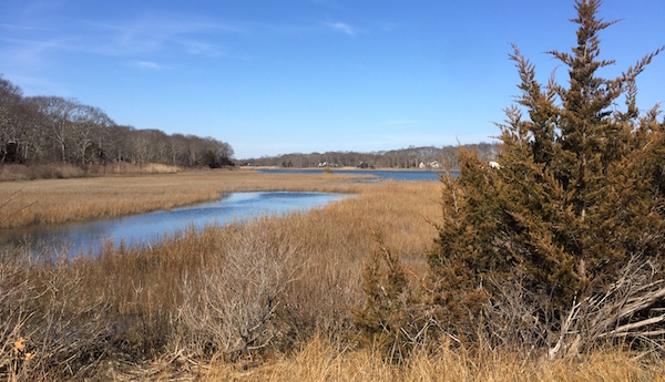 Marsh Cutchogue